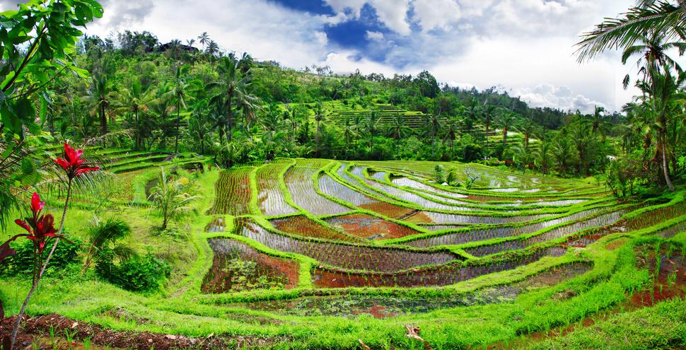 Bali web 2