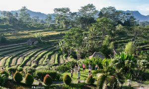 La Naturaleza en Bali